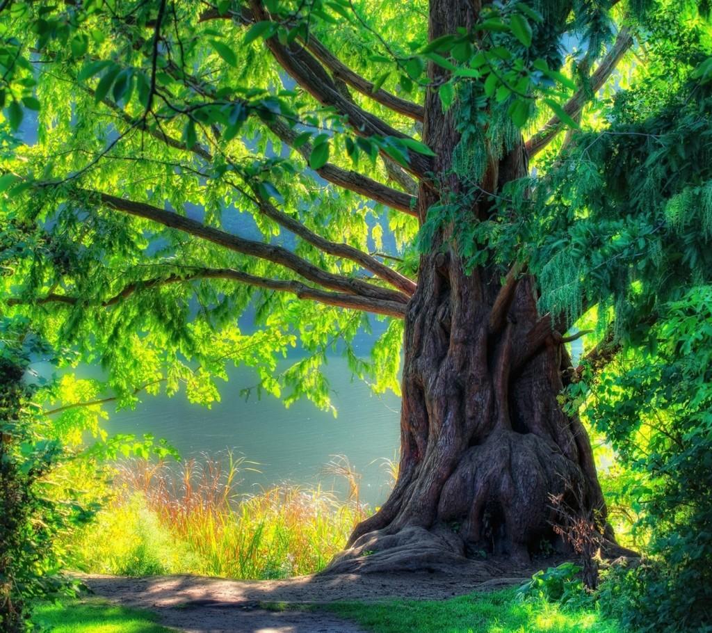Green Nature_92
