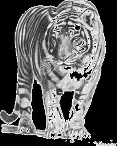 animal-159741_640