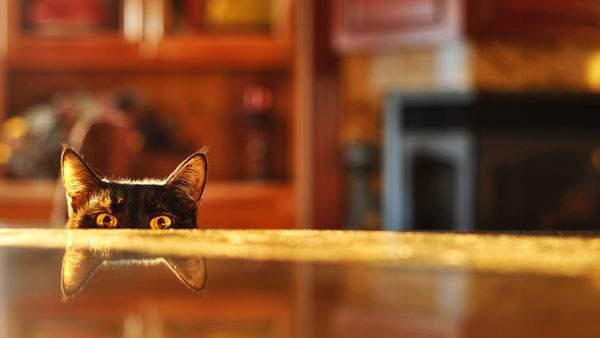 wallpaper-cute-cat-12